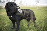 Unidad Canina del FBI Ayuda a Víctimas a Sobrellevar Tragedias
