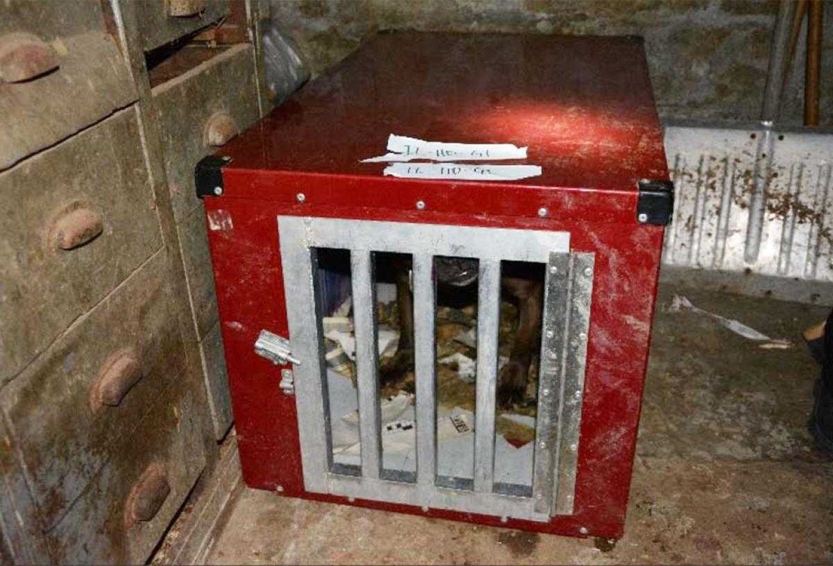 Asset Forfeiture: Cage in Dogfighting Operation