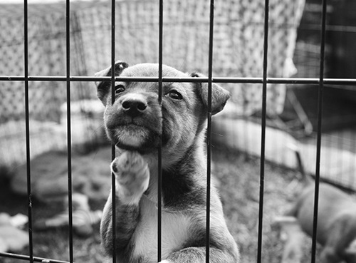 Dog in cage. Stock image.