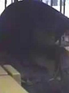 Suspect who robbed the Wells Fargo Bank branch located at 245 Santa Helena in Solano Beach, California on September 17, 2014.