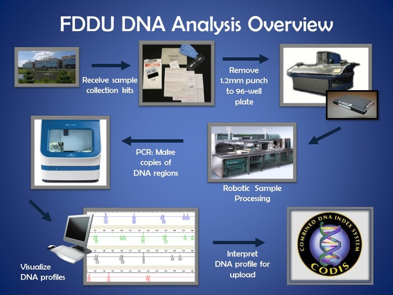A visual, step-by-step representation of the DNA sample submission and testing process used by FDDU.
