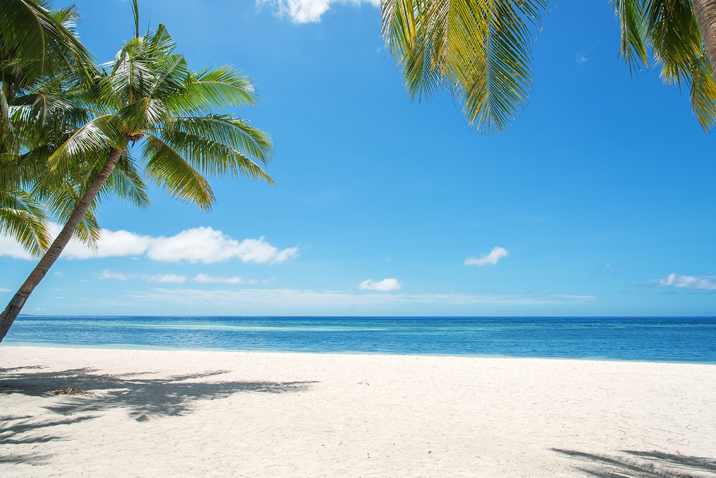 Stock image of a tropical beach showing clear skies, blue water, white sand, and palm trees.