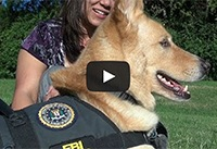 Helping Victims of Crime: Therapy Dog Program a First for the Bureau