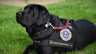 FBI Crisis Response Canines