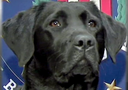 FBI, This Week: Iris, the FBI's Electronics Detection Canine